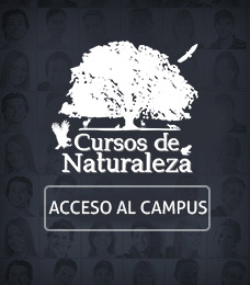Acceso al campus virtual