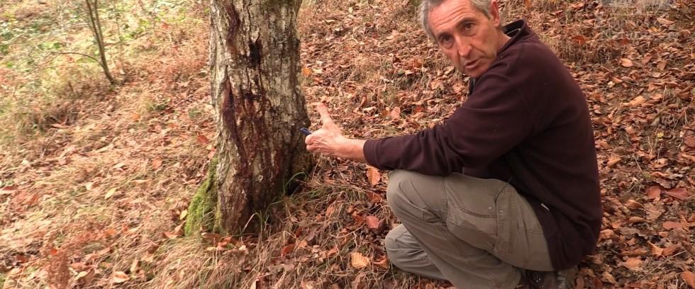 Curso Completo De Identificación De Huellas, Rastros Y Señales De Fauna Ibérica