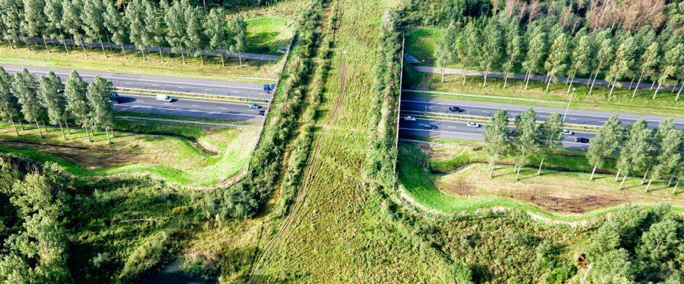 Fragmentación de hábitats y corredores ecológicos